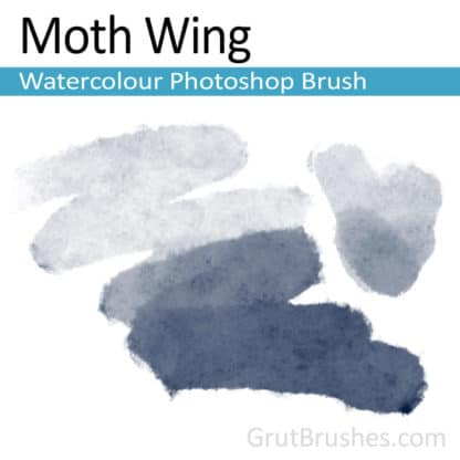 Moth Wing - Photoshop Watercolour Brush
