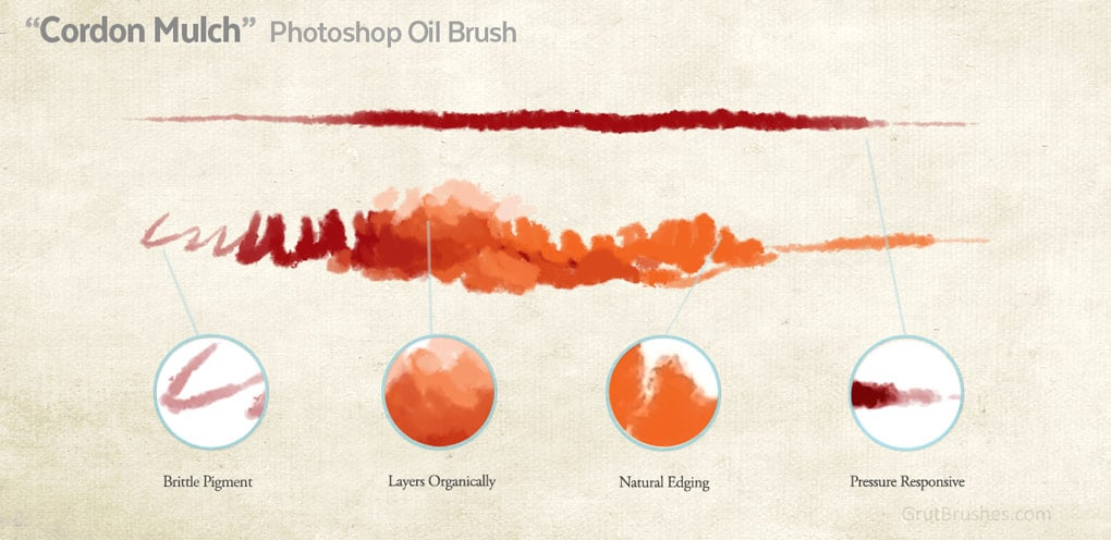 Photoshop Oil Paint brush 'Cordon Mulch' brush stroke characteristics